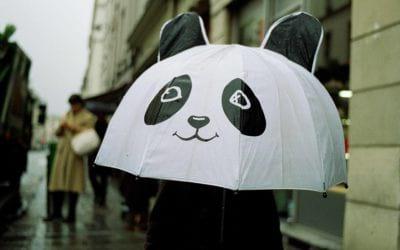 Les espèces parapluies nous protègent bien plus que de la pluie !