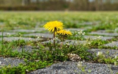 L'évolution en 130 ans de la flore parisienne confirme le réchauffement climatique