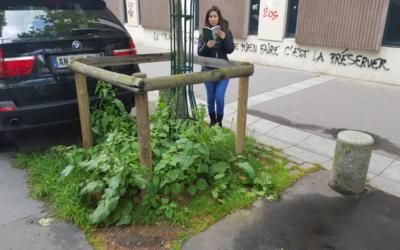La guerre de colonisation des pieds d'arbres d'alignement en ville